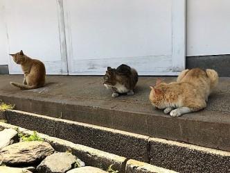 猫ちゃん5