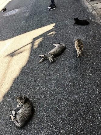 猫ちゃん4
